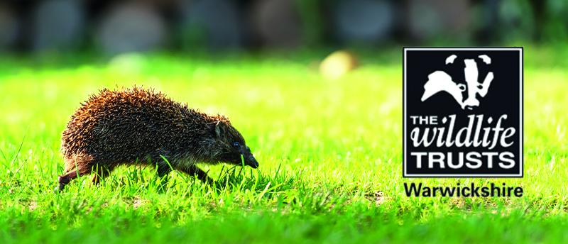 Hedgehog-min